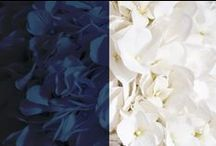 navy blue and white wedding / Wedding ideas for navy blue and white weddings! MIdnight blue, dark blue and white.