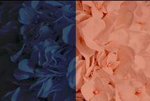 Navy Blue + Peach Weddings / Wedding ideas for navy blue and peach wedding. Navy blue and coral ideas as well.
