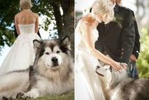 myHumane Weddings / by The Humane Society of the United States