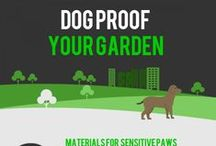 A Humane Backyard / Tips and tricks on how to make your backyard wildlife-friendly!