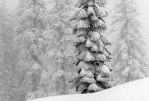 SEASONAL ▴ Winter