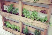 Garden - Vegetables ✿