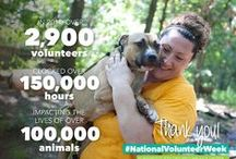 Volunteers / We want to celebrate the thousands of volunteers that have clocked hundreds of thousands of hours to help us, and our many affiliates, impact the lives of thousands of animals. Thank you for all you do! / by The Humane Society of the United States