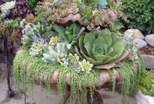 Gardening / Gardens, flower gardening,vegetables and organic gardening.