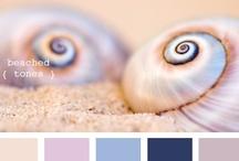 Color Palettes / by Aurelia