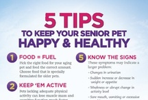 Pet Health and Care tips / Great information on caring for you dog or cat and important health information.