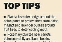 Garden Tips / by Ellisha