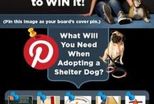 What an adopted shelter dog needs / by Nicole Carter