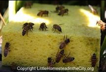 Beekeeping...Someday / All things Bee related. Something I hope to do one day.