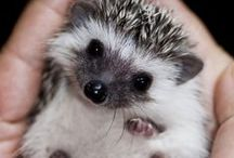 squeeee / cute stuff to make you squeal