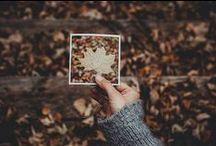Autumnal  /