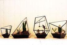 Grow / Gardening & plants