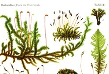 Painting & Illustrations: Plants / by Byungsoo Chae