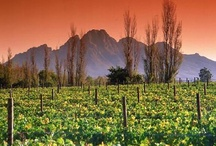 Cape Town | Cape Winelands / by Great Wine Capitals