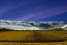 Mendoza / by Great Wine Capitals