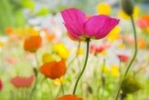 Bloomin' blooms!