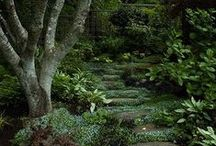 Dreamy Environments / Beautiful real life places, plants, and architecture!