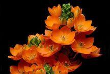 orange / Orange is the happiest color - Frank Sinatra