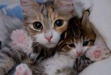 Animal Love / Amore per gli animali