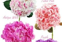 Types of Flower and Color pallets