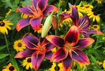 Garden | Plants / Beautiful garden plants - I'd love to try them all!! / by Missy Grenell