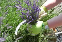 GARDENING!!! / Growing vegetables and herbs in our yard!!! / by Paula Butler