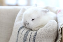 B U N N Y  F E V E R / #rabbit #bunny / by Amanda   Living in Another Language