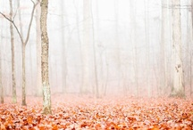 Fall / by Nanette Dorbeck