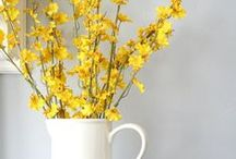 Home - decorating projects / by Stephanie Christopherson