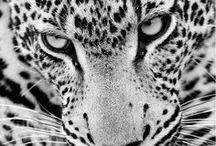 Animals / Minimalist Photography Inspiration