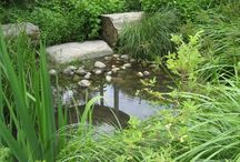 Rain Gardens / Rain gardens are water features that celebrate natural processes, growing during storm events and then subsiding.  Rain gardens enhance natural processes, increasing groundwater infiltration and helping to break down contaminants, keeping them out of local waterways.