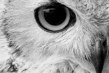 All about Owls / by Absolut Steph