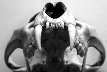 S K U L L ☠  / by •••  Jean-Baptiste Denneulin       •••