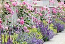 Garden love!