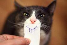 Tanden gepoetst ?