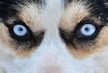 Het oog wil ook wat.