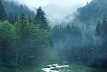 Fog / by Inna K