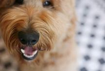 Dogs, dogs, dogs / by Randi Heimert