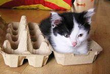 crazy cat lady. / cute cats, funny cats and more cats. www.kiarayoga.com