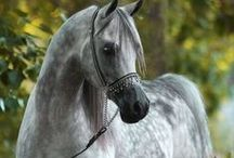 Beautiful Horses / by Dawn Havens