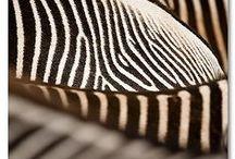 S T Y L E ▄ A F R I C A / interior style / стили : Африка - это ваш стиль если : ✜ вы любитель экзотики, колорита и солнечной энергетики «черного континента» ✜ вас завораживают шаманские маски, статуэтки Мозамбика и Зимбабве, ткани с геометрической аппликацией ✜ вы любитель «теплых» тонов : песочного, оливкового, терракотового ✜ в отделке вы предпочитаете натуральные материалы: экзотическое дерево, ткани, глиняную керамику