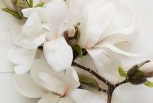 W H I T E  M O O D / we love... / настроение white: мы любим...