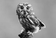 owlery.