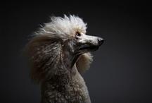 Dogs / by Natasha Sokol