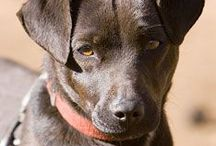 Patterdale Terriers / Dr. Psych Mom has a Patterdale Terrier and they are awesome!  Love my rescue dog.