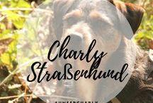 Unser Charly - Straßenhund / Charly kam direkt von der spanischen Sraße in unsere Familie. Lieblingshund oder auch Lastrami genannt: LandStraßenMischung