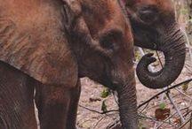 Maisha - David Sheldrick Wildlife Trust