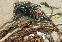 FREE the seaweed!