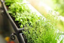 garden / Ideas and useful info for starting a small garden.