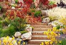 Garden LOVE! - Drought-Tolerant Plants for the Front Yard